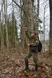 Researcher radio tracking Siberian flying squirrel (Pteromys volans) in mature mixed forest. Muraka Forest Reseve, near Lisaku, Estonia. April 2018. Model released. - Nick Upton