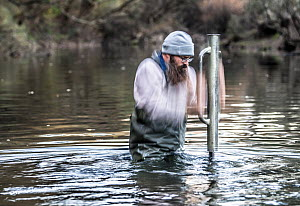 Freshwater ecologist banging a star picket stake into the river to which a Fyke net will be secured. This net will then used to try and capture platypus (Ornithorhynchus anatinus) for research, Mitta...  -  Doug Gimesy