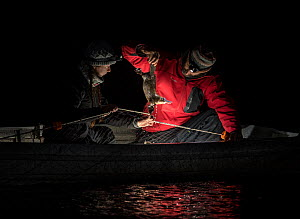 Two researchers row into the middle of the Snowy River to collect a platypus (Ornithorhynchus anatinus) from the gill net they had set hours before. Snowy River, Dalgety, NSW, Australia. September 201...  -  Doug Gimesy