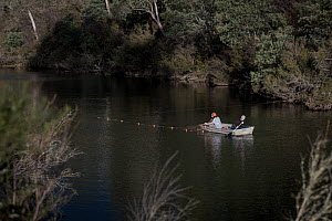 Platypus (Ornithorhynchus anatinus) researchers placing gill nets in the Snowy river. Mitta Mitta River, Dartmouth, Victoria, Australia. May, 2018. Model released. - Doug Gimesy