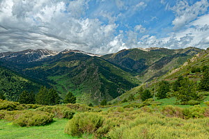 Col de Mantet, North of Mamtet, French Pyrenees, France. May 2018.  -  Robert  Thompson