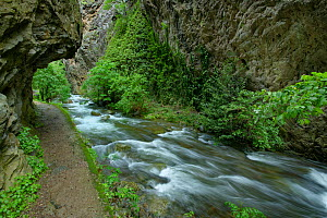 Vallee de la Caranca Gorges, French Pyrenees, France. May - Robert  Thompson