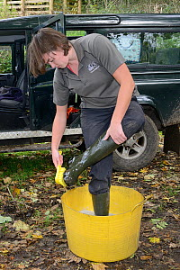 Emma Settle of GWT disinfecting her boots before helping to release White-clawed crayfish (Austropotamobius pallipes) at an ARK site, safe from Signal crayfish (Pacifastacus leniusculus) and Crayfish...  -  Nick Upton