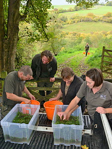 GWT team placing White-clawed crayfish (Austropotamobius pallipes) collected from a well-stocked stream in buckets for release at an ARK site, safe from Signal crayfish (Pacifastacus leniusculus) and... - Nick Upton