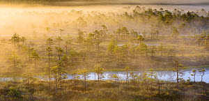 Morning mist over bog scattered with trees. Endla Nature Reserve, Jogevamaa, Central Estonia. August 2015. - Sven  Zacek