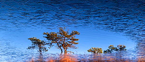 First ice on bog pool with trees reflected in water. Jogevamaa, Central Estonia. October 2015. - Sven  Zacek