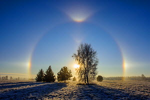 Sun dog over trees in frosty landscape. Tartumaa, Southern Estonia. December 2015.  -  Sven  Zacek