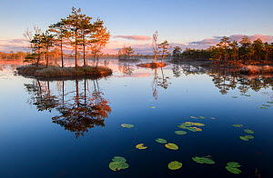 Reflections in bog pool of forest and wooded islands, at sunrise. Polvamaa, Southern Estonia. - Sven  Zacek