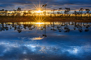 Sunset reflected in a bog pool covered with first ice of winter. Tartumaa, Southern Estonia. December 2015. - Sven  Zacek