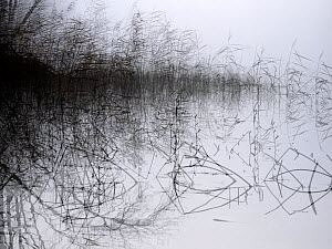 Lines and shapes including reeds at lake. Akershus, Norway. October 2018. Multiple-exposure.  -  Pal Hermansen