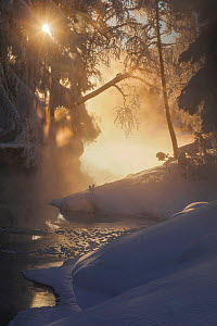 River with snowy banks and overhanging trees, in morning mist. Akershus, Norway. January.  -  Pal Hermansen