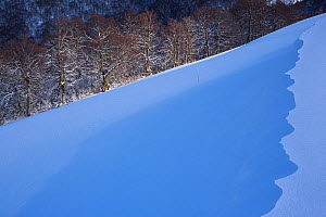 Sunset light on Val Cervara old-growth beech forest after winter snowfall. Europe's oldest Beech (Fagus sylvatica) forest. Abruzzo, Lazio and Molise National Park / Parco Nazionale d'Abruzzo,...  -  Bruno D'Amicis