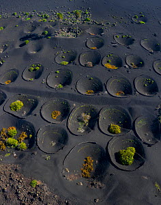 Aerial view of abandoned vineyard where plants were cultivated in volcanic soil which captures moisture and surrounded by walls which protect the plants from wind, La Geria, Lanzarote Island, Canary I... - Juan  Carlos Munoz