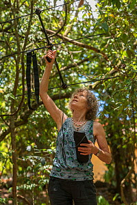 Margit Cianelli with radio collared Lumholtz's tree-kangaroo (Dendrolagus lumholtzi) 'Kimberley'. The radio collar allows this juvenile to explore the nearby forest before its eventual rel...  -  Jurgen Freund