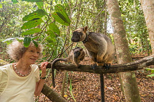 Margit Cianelli with Lumholtz tree kangaroo (Dendrolagus lumholtzi) 'Kimberley', a kangaroo she raised from a baby, now living in nearby forest with her own joey. Lumholtz Lodge, Atherton Tabl...  -  Jurgen Freund