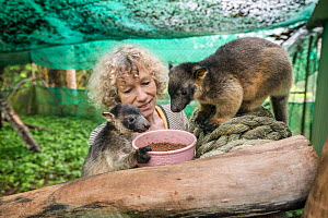Wildlife carer Margit Cianelli with young Lumholtz's tree-kangaroo (Dendrolagus lumholtzi) in secure outside exercise area. Lumholtz Lodge, Atherton Tablelands, Queensland, Australia. Model releas...  -  Jurgen Freund