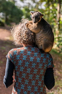 Wildlife carer Margit Cianelli carrying Lumholtz tree kangaroo (Dendrolagus lumholtzi) 'Kimberley' on her shoulder, rear view. Lumholtz Lodge, Atherton Tablelands, Queensland, Australia. Model...  -  Jurgen Freund