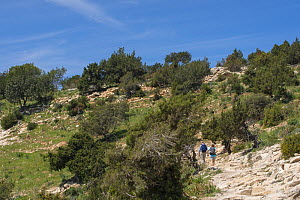 Hikers walking rocky landscape with trees. Akamas Peninsula National Park, Cyprus. April 2017. - Edwin Giesbers