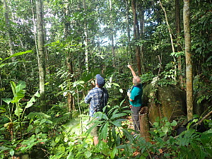 Natural history photographer Clay Bolt and writer Glen Chilton examine a termite mound while searching for Wallace's giant bee (Megachile pluto) Mollucas, Indonesia. January 2019  -  Clay Bolt