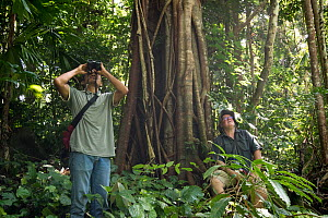 Scientists observing a termite mound after a large flying insect was found nearby in a healthy patch of lowland forest, North Moluccas, Indonesia. January 2019  -  Clay Bolt
