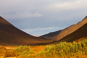 Steeply sided mountains with regenerating Scots Pine and Birch forest in the valley, Alladale Rewilding project, Scottish Highlands, UK, October. - David  Woodfall