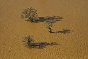Oak trees (Quercus robur) in flooded field, Severn Valley, Gloucestershire, England, UK, February 2014.  -  David  Woodfall