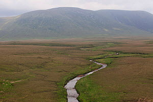 River Owenduff flowing though a blanket bog habitat, Republic of Ireland. June. - David  Woodfall