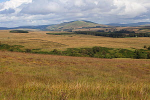 Landscape of Langholm moor, Dumfries & Galloway, Scotland., UK, August. - David  Woodfall