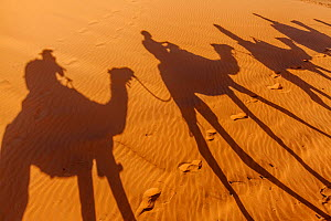 Shadows of tourists riding domestic Arabian / Dromedary Camel (Camelus dromedarius) on sand, Erg Chebbi dunes near Merzouga, Sahara Desert, Morocco, October - Claudio  Contreras