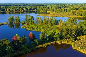 Aerial view of wetlands landscape, Wolf (Canis lupus) habitat, Saxony, Germany, September.  -  Axel  Gomille