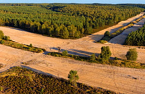 Military training ground, with bare land to prevent fires from spreading if caused during training manoeuvrers. This area is habitat to a population of wild Wolves (Canis lupus) as well as other rare...  -  Axel  Gomille