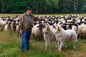 Farmer with sheep dogs which guard the herd from wolves. Saxony, Germany, June 2015.  -  Axel  Gomille