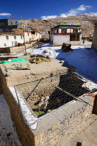 Sheep pen covered in wire to protect livestock from Snow leopard (Pantehera uncia) attack in the village of Kibber in Spiti valley, Cold Desert Biosphere Reserve, Himalaya mountains, Himachal Pradesh,... - Oriol  Alamany