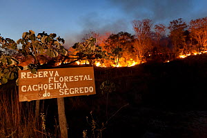 Forest fire in the Cerrado during dry season. Chapada dos Veadeiros National Park, Goias, Brazil. September 2010. - Angelo Gandolfi