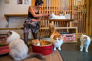Woman feeding cat at Kawaramati Cat Cafe, Kyoto, Japan. - Karine Aigner