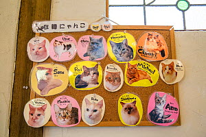 Names of cats on board at the Kawaramati Cat Cafe Kyoto, Japan - Karine Aigner