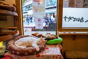 Cats resting at Kawaramati Cat Cafe Kyoto, Japan - Karine Aigner