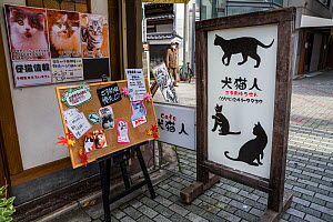 Sign outside Kawaramati Cat Cafe Kyoto, Japan - Karine Aigner
