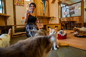 Woman taking pictures of cats at Kawaramati Cat Cafe, Kyoto, Japan - Karine Aigner