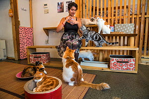 Woman with cats at Kawaramati Cat Cafe Kyoto, Japan  -  Karine Aigner