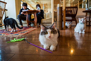Cats at the Kawaramati Cat Cafe Kyoto, Japan. - Karine Aigner