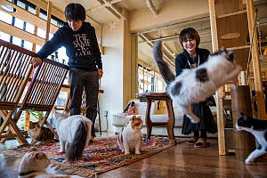 Japanese people playing with cats at the Kawaramati Cat Cafe Kyoto, Japan. - Karine Aigner