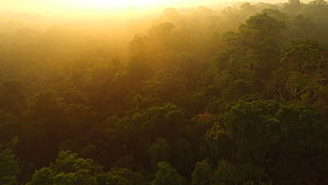 Aerial shot of the canopy of the Amazon Rainforest at dawn, Rio Tambopata, Madre de Dios, Peru, 2016.  -  Mark  Bowler