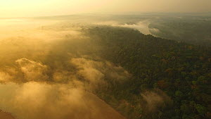 Aerial shot of the Amazon Rainforest at dawn, with mist over the canopy, Rio Tambopata, Madre de Dios, Peru, 2016.  -  Mark  Bowler