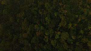 Aerial shot of the Amazon Rainforest, looking down on canopy, Rio Tambopata, Madre de Dios, Peru, 2016. - Mark  Bowler