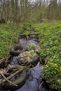 Tyres dumped in woodland stream, Norfolk, England, UK. April 2007.  -  Ernie  Janes