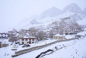 Key village and monastery (Buddisth) snowed in Spiti valley, Cold Desert Biosphere Reserve, Himalaya mountains, Himachal Pradesh, India, february - Oriol  Alamany