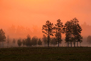 Sunrise backlights some outlying trees of Heilongjiang's boreal forest. Yichun City, Heilongjiang Province, China. July 2016.  -  Jed Weingarten / Wild Wonders of China