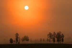 Sunrise backlights some outlying trees of Heilongjiang's boreal forest. Yichun City, Heilongjiang Province, China.  -  Jed Weingarten / Wild Wonders of China