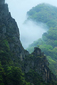 Fog / misthanging over the mountains, Tangjiahe Nature Reserve, Sichuan province, China. April 2015. - Jed Weingarten / Wild Wonders of China